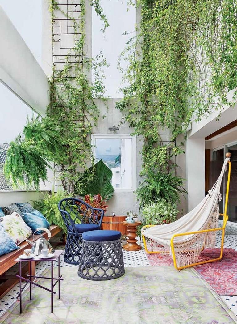 Indoor Vines And Climbing Plants